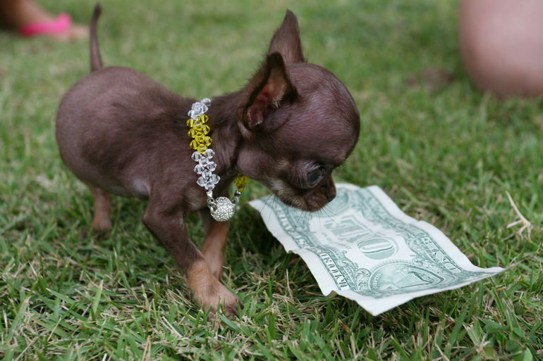 Smallest dog in the world: Milly