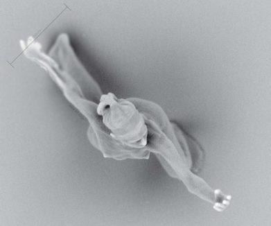 Worlds smallest human sculpture